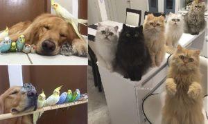 Биоритмы и здоровье домашних животных