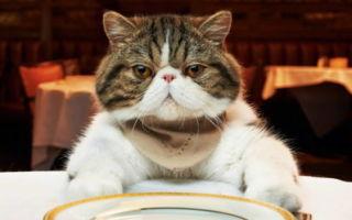 Чем кормить кастрированного кота дома?